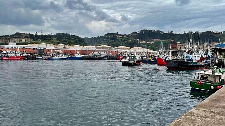 La campaña del bocarte alcanza los tres millones de kilos descargados en Gijón
