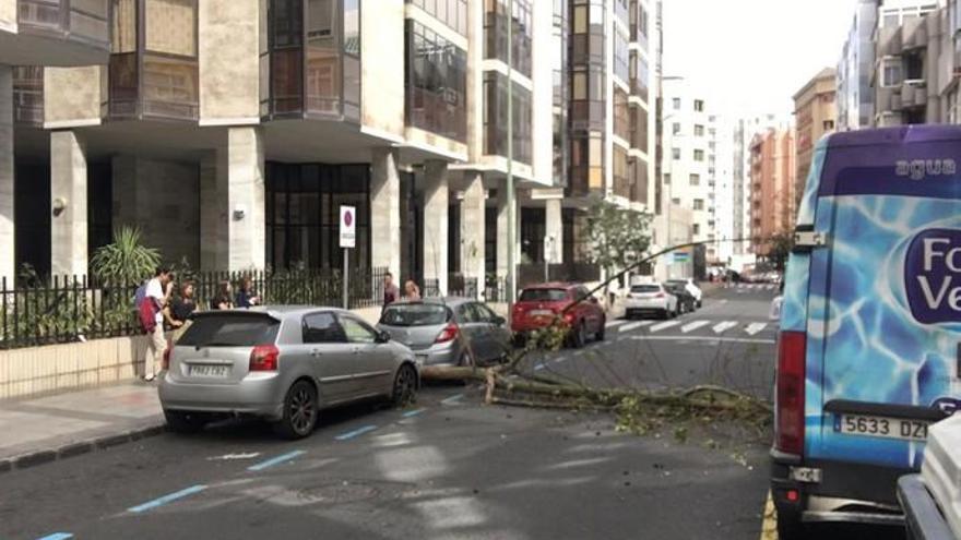 Un árbol cae en mitad de la calzada de la calle Cayetano de Lugo