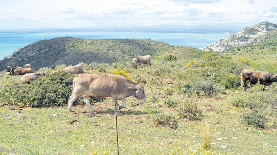 La Badia dels tres parcs naturals costaners