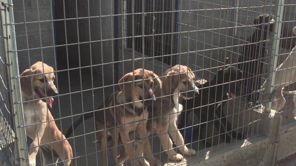 Algunos canes de la perrera municipal.