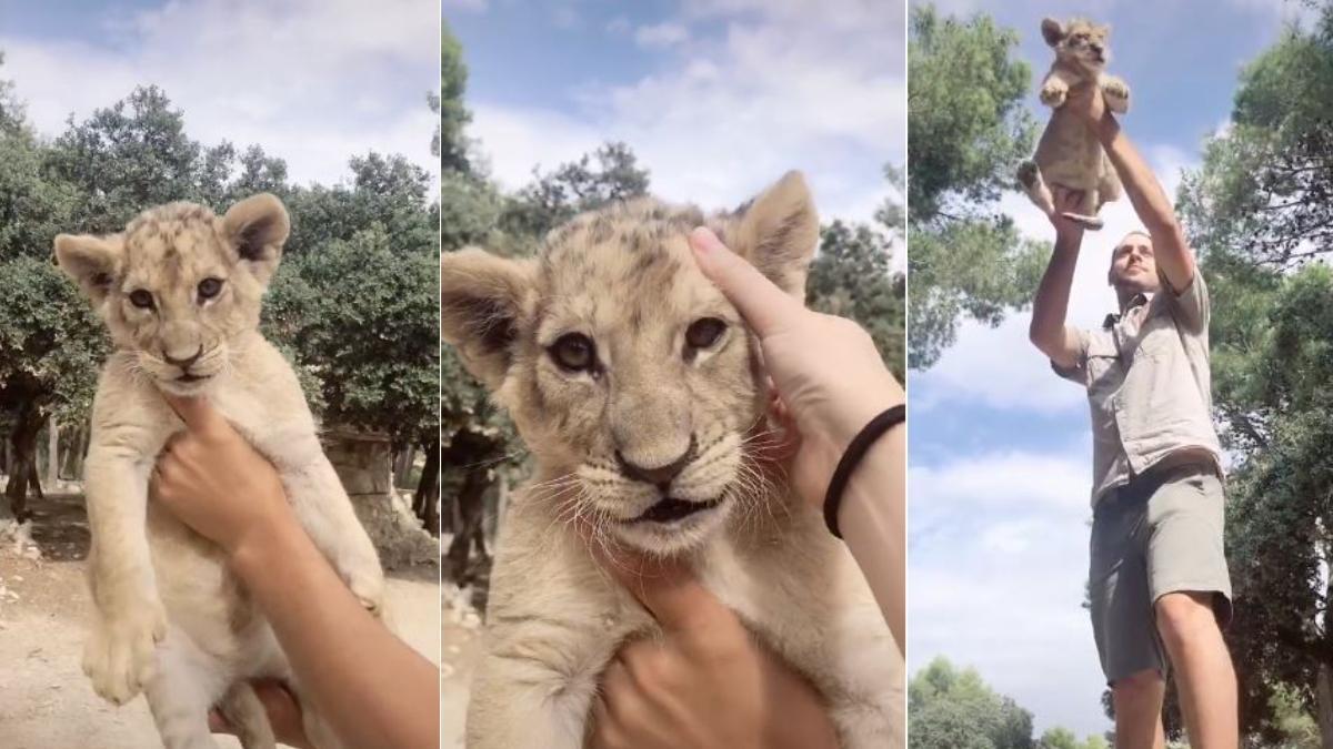 Safari Aitana recrea la escena más famosa de 'El Rey León' en TikTok.