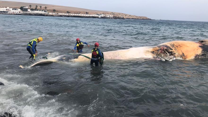 Retirada de una ballena muerta de Ojos de Garza, en Telde