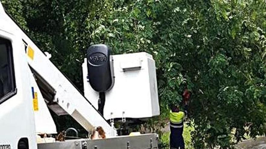 El Ayuntamiento de Langreo despeja tres carreteras tras la caída de árboles