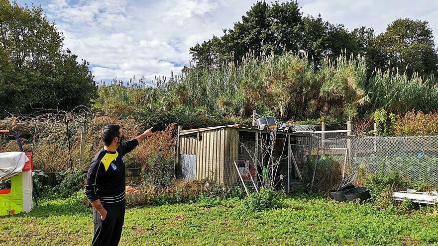 """Vecinos de Lajes do Pico piden la limpieza de una """"selva"""" que vinculan al complejo Massó"""