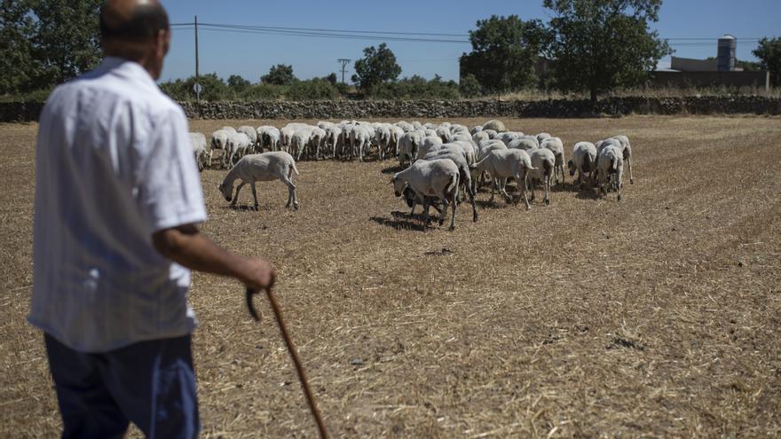 COAG, en contra de ampliar el estatus de protección del lobo, también en Zamora
