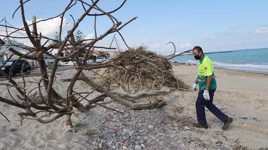Cientos de cañas de la riada de Benicàssim sorprenden a los bañistas de las playas de Almassora y el Grau de Castelló