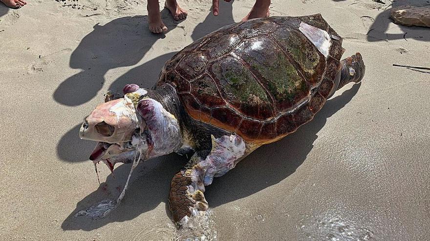 Extraña aparición en una playa de Formentera