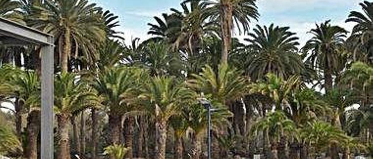 Parque Tony Gallardo de Maspalomas, terminado y sin inaugurar.