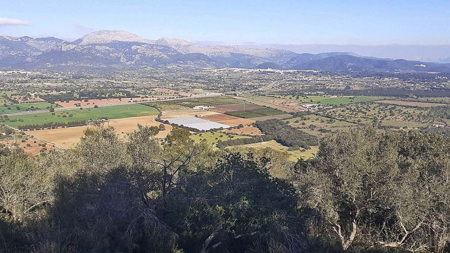 Medio Ambiente rechaza un parque solar en Inca por el potencial agrícola de la finca