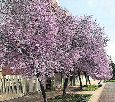 La estación de primavera que comienza hoy se alargará durante 92 días y 18 horas