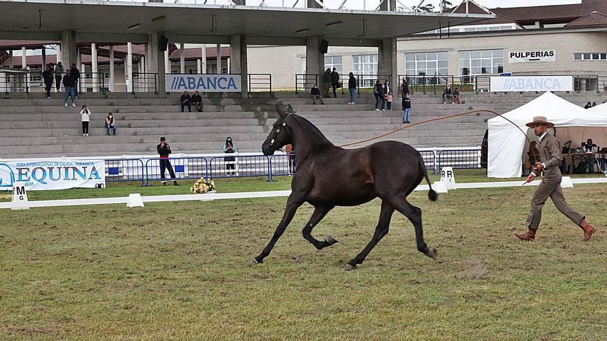 Los caballos ya trotan en Silleda