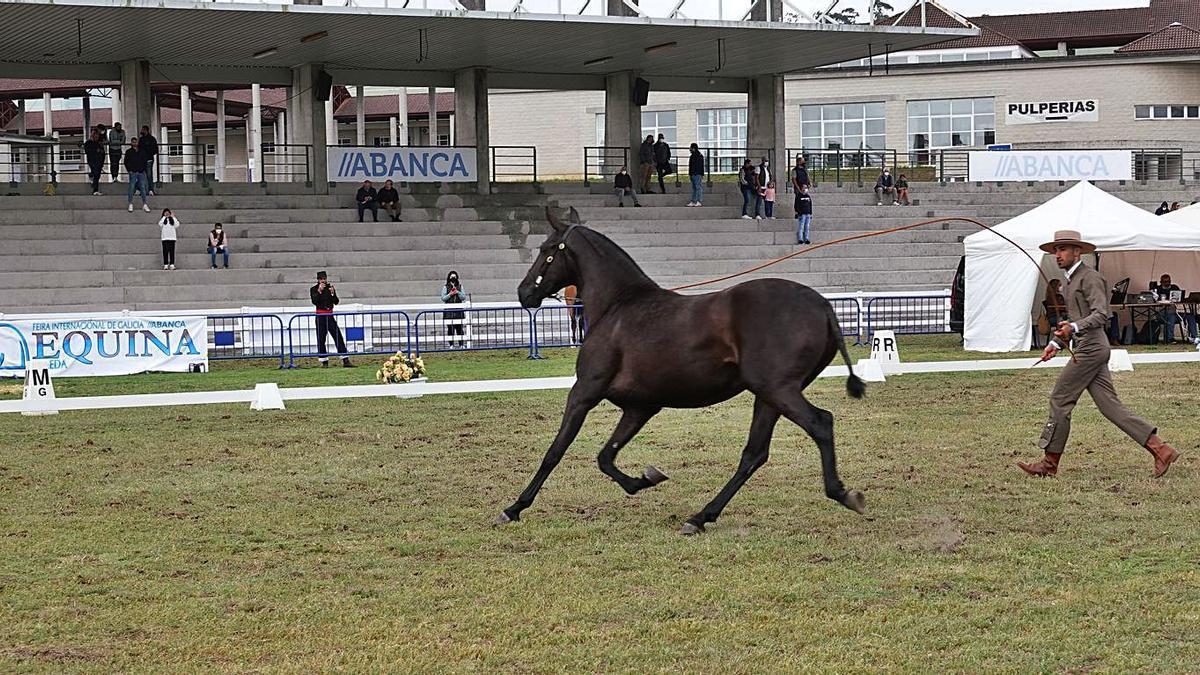 Uno de los participantes en el campeonato de pura raza española, durante su ejercicio.