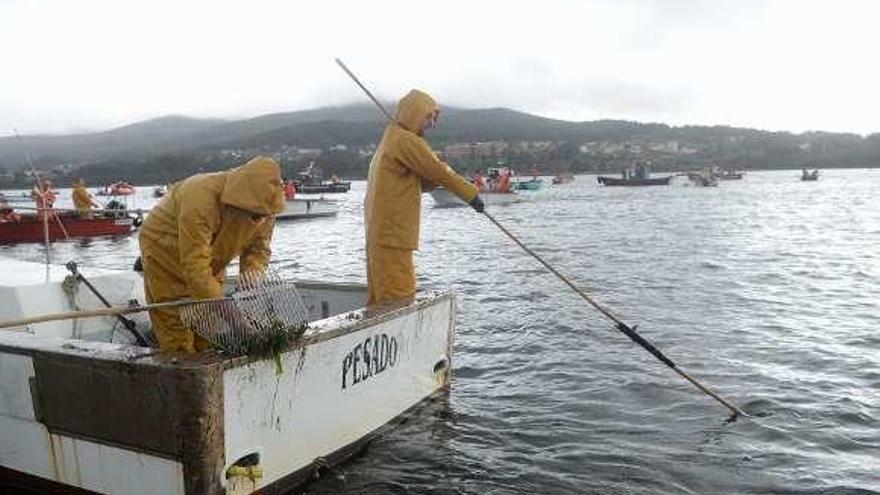 Preocupación en Carril por la práctica del marisqueo en Os Lombos durante el desove