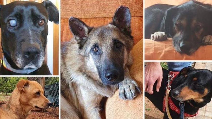 ¿Quieres una mascota? Aquí tienes cinco perros que necesitan una adopción urgente en Castellón