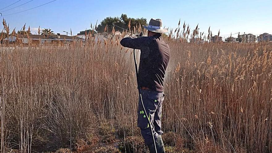 Benicàssim recibe tres avisos a la semana por los mosquitos