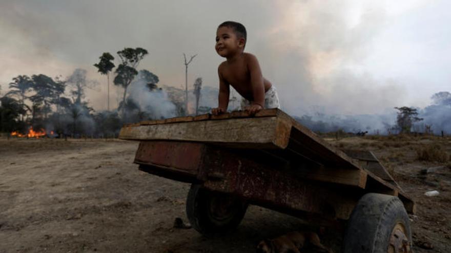 Más de 1.200 especies, amenazadas por el fuego en la Amazonia boliviana