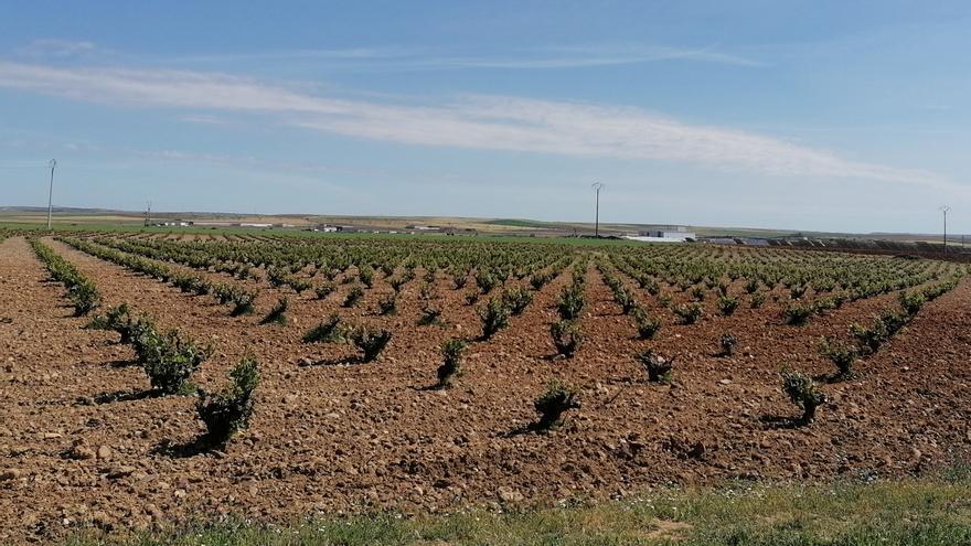 La IGP Vino de la Tierra de Castilla y León da cabida a variedades minoritarias