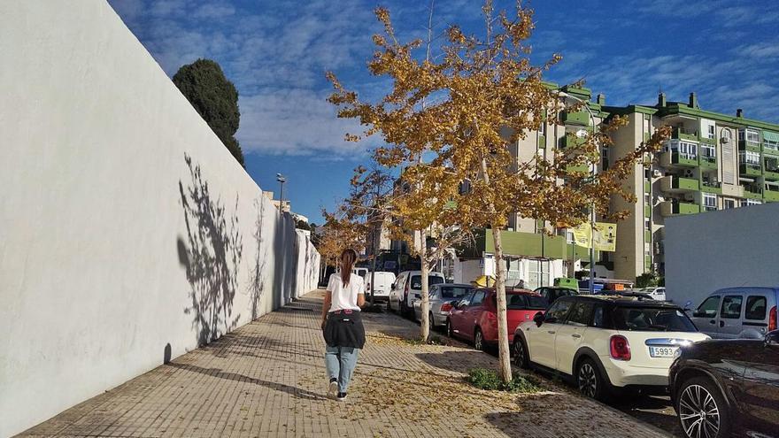 Los árboles orientales de la calle Julio Gómez