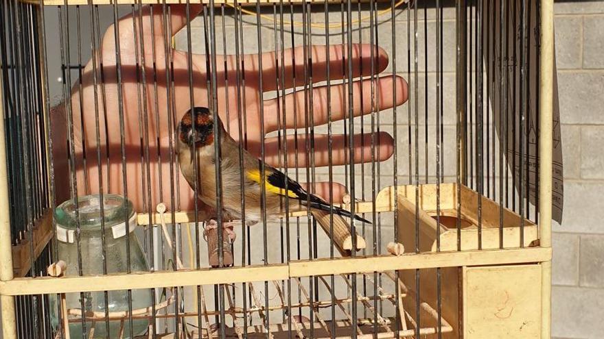 Denunciat per parar una xarxa de captura il·legal d'ocells a Palau-saverdera