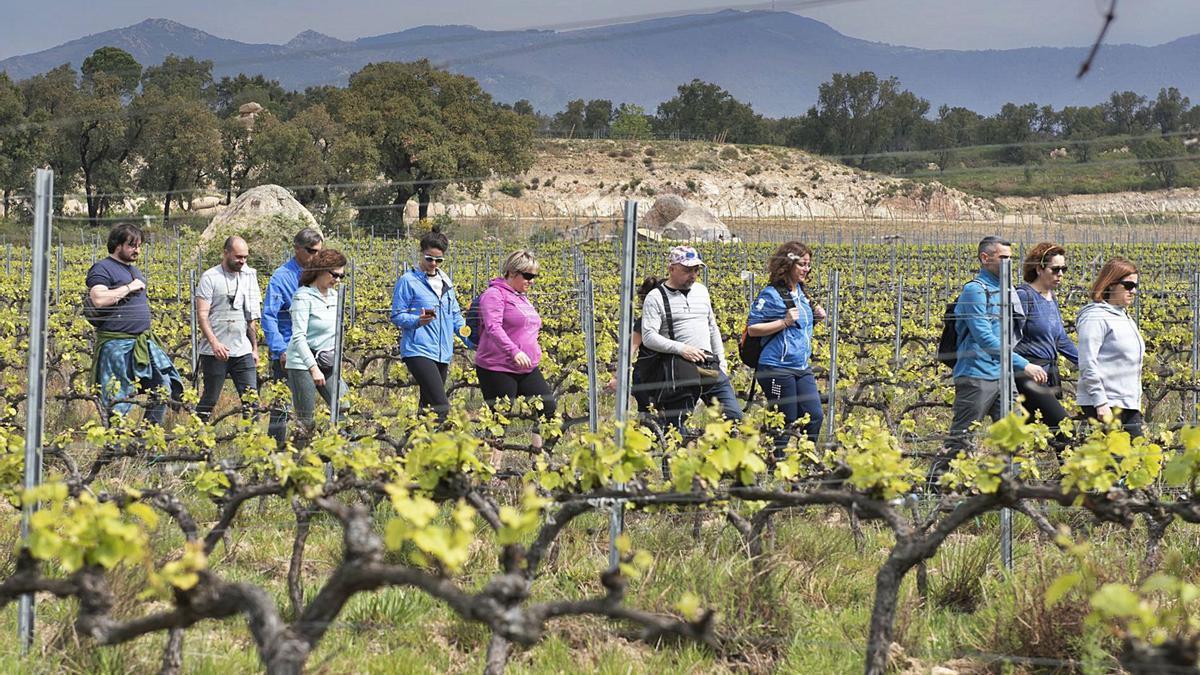 La presència de visitants a les vinyes permet als cellers explicar la seva feina