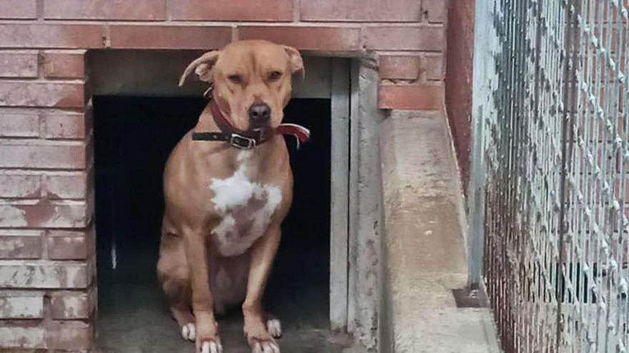 Advierten que dejar perros a la intemperie es delito