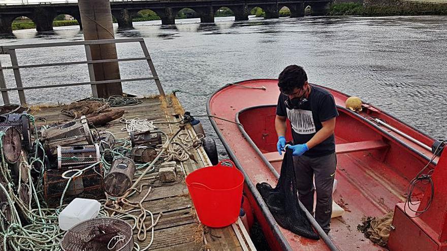 Carril subasta 559 kilogramos de anguila en solo tres días