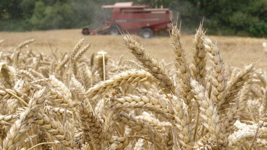 Lonja de Zamora | Trigo y cebada bajan su cotización