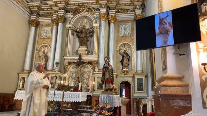 Las celebraciones más atípicas de Sant Antoni