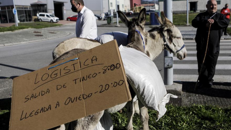 """""""Cañón"""", hasta Tineo en burro, como en 1900"""