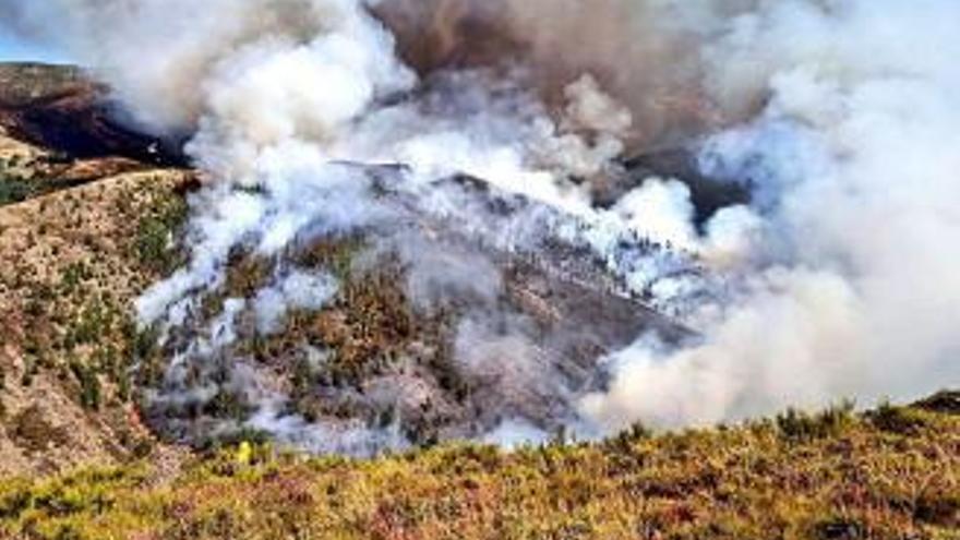 Arden casi 725 hectáreas en siete incendios forestales, cinco de ellos sin control