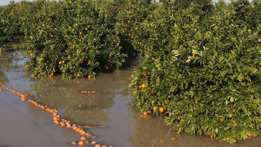 El temporal de viento y lluvia daña 140.000 hectáreas de cultivos en la C. Valenciana