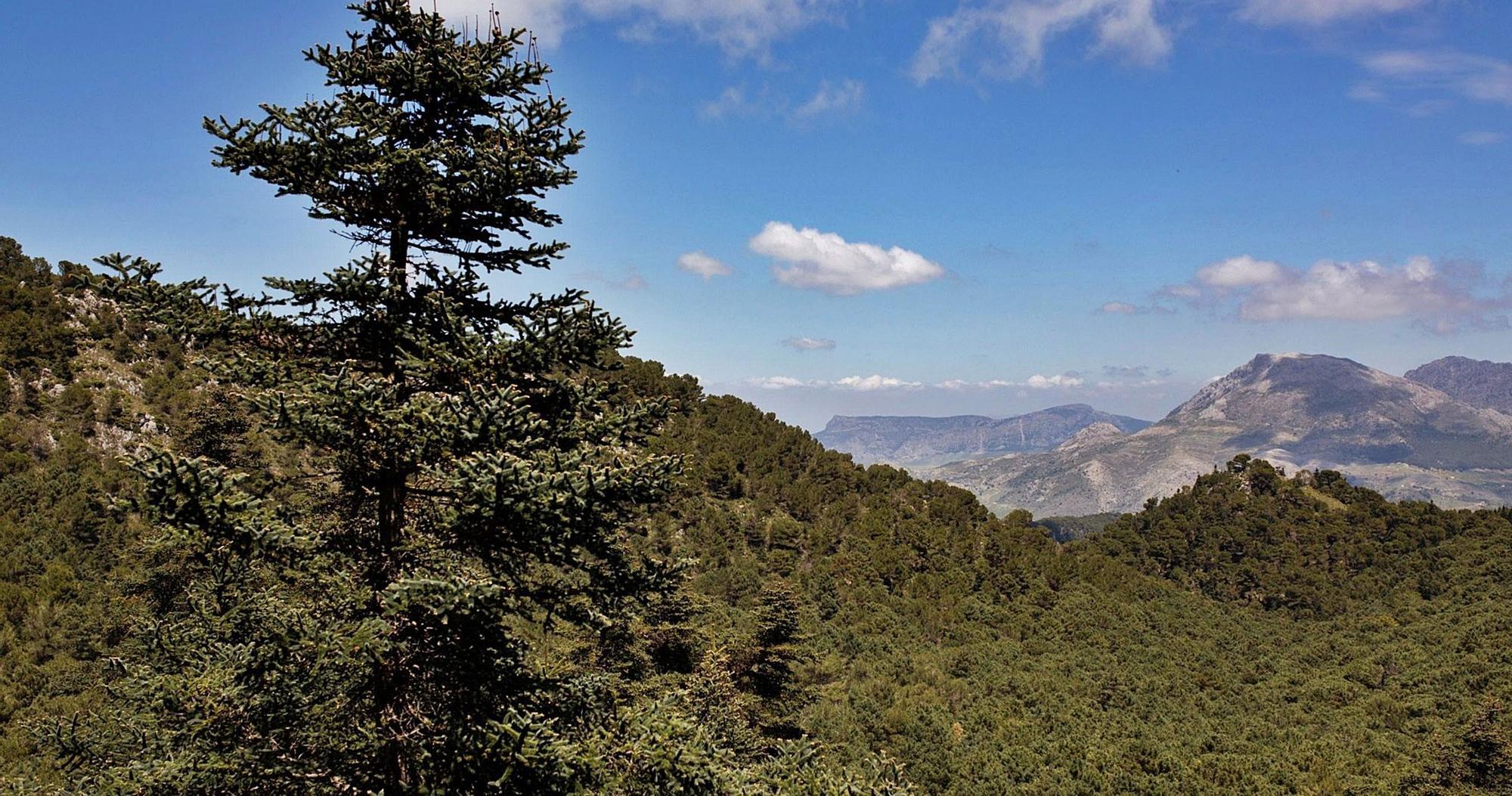 El futuro Parque Nacional de la Sierra de las Nieves se extenderá a lo largo de unas 23.000 hectáreas.
