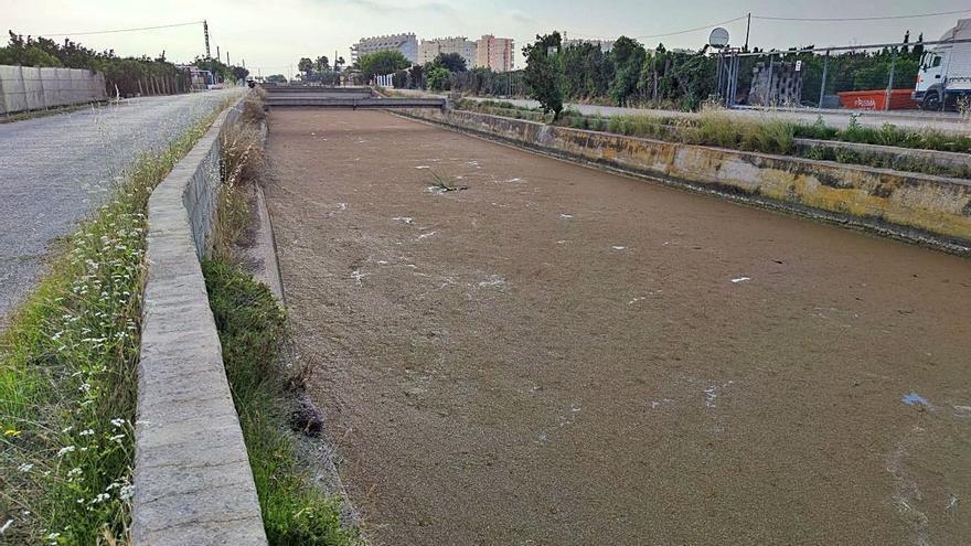Un alga cubre por completo el canal del Vaca entre Tavernes y Xeraco