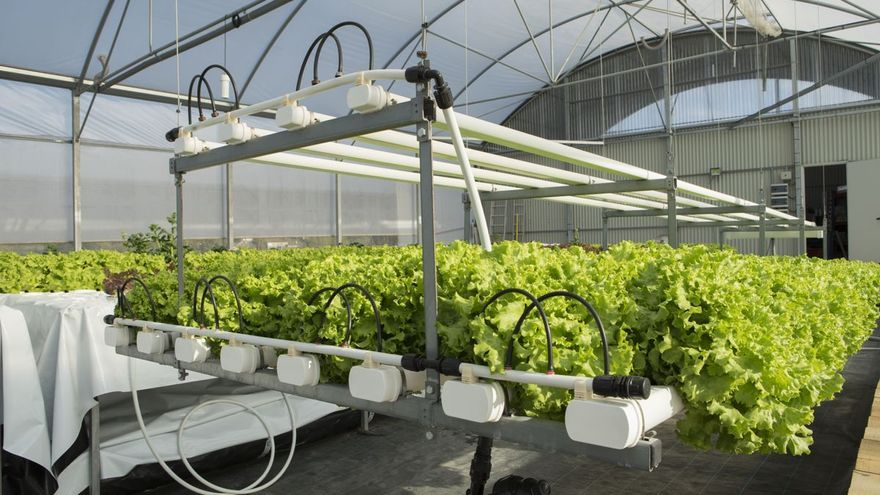 Startups, las protagonistas de la revolución tecnológica agroalimentaria