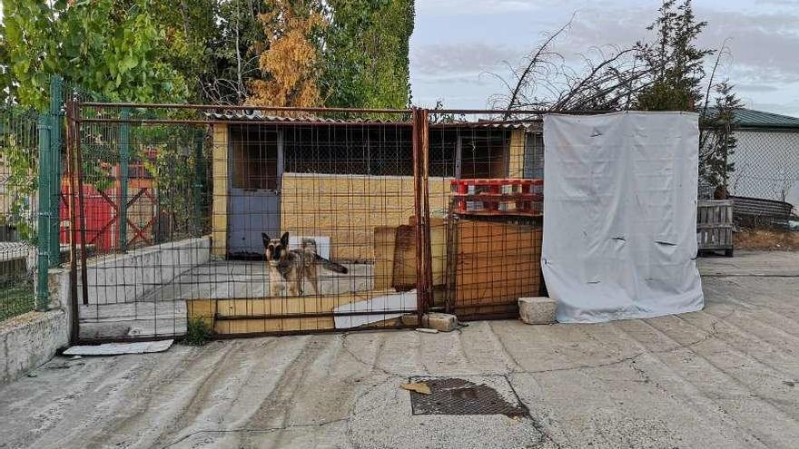 En la imagen, instalaciones de la perrera municipal y uno de los animales realojados.