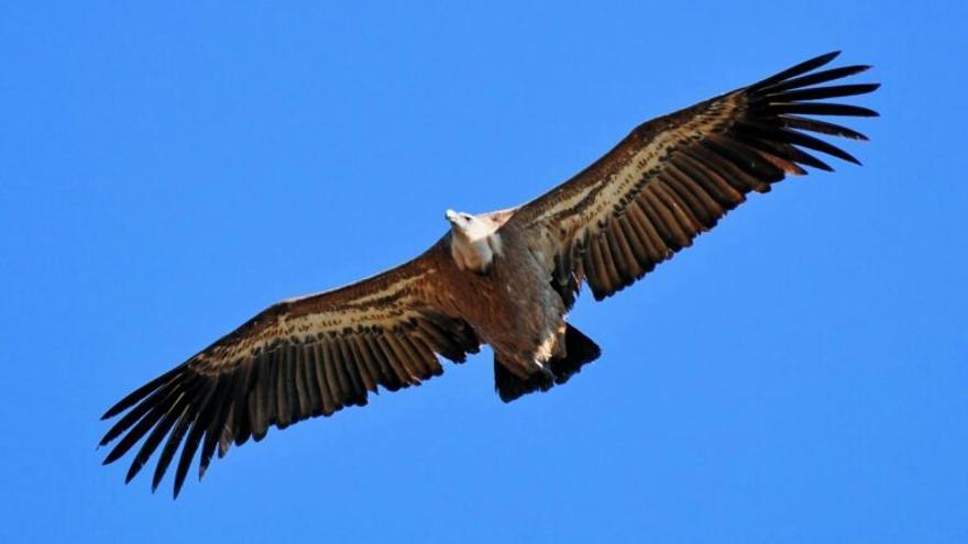 Doce avionetas estrelladas en España desde 2000 por chocar con aves