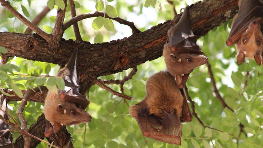 Los murciélagos 'vampiro' saber mantener sus amistades