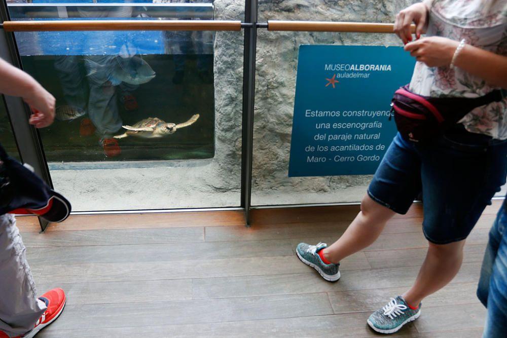 La Opinión de Málaga ha visitado el Museo Alborania, que expone más de 5.000 piezas y al que acuden no sólo escolares, sino muchos turistas, con el fin de celebrar con el Aula del Mar sus treinta años de vida