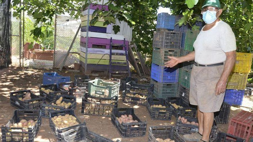 Roban más de 400 kilos de patatas de un campo de cultivo de Moncofa