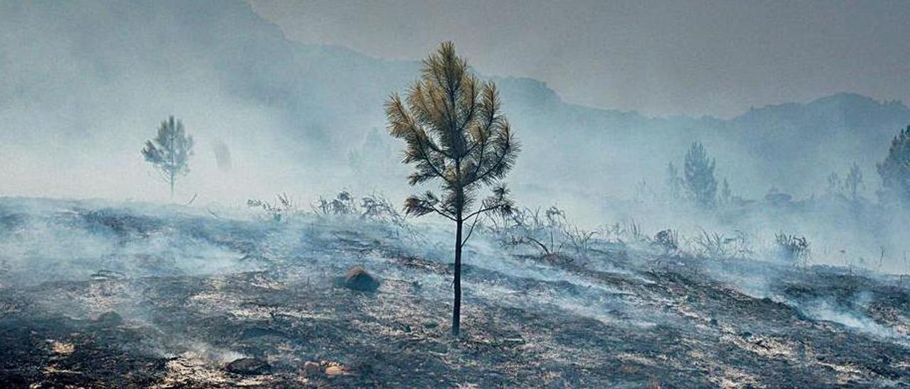 incendio del Parque Natural da Baixa Limia-Serra do Gerés, .
