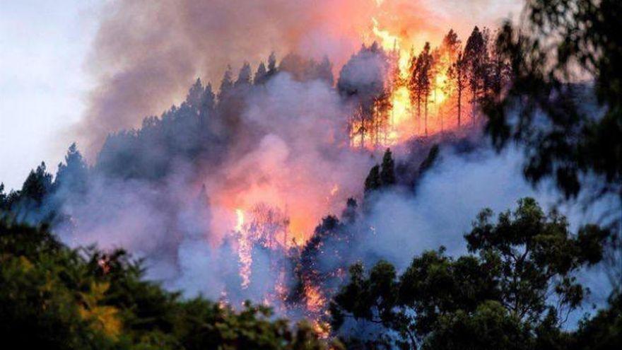 Alerta máxima por incendios forestales en Gran Canaria y las islas occidentales