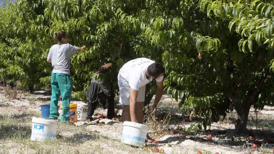 El Ministerio de Agricultura concede a Bèlgida 720.000 euros para su regadío