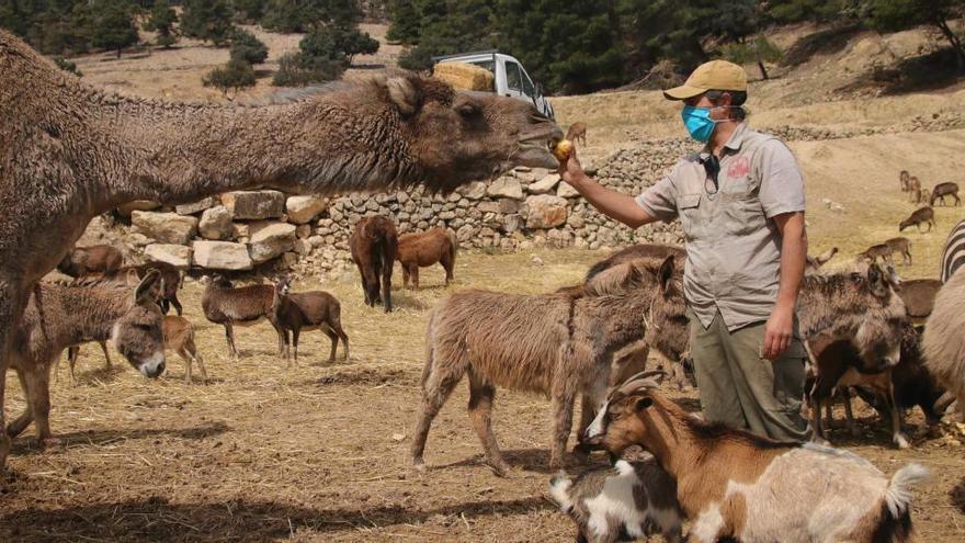 El cierre del Safari Aitana pone en riesgo la alimentación de sus 500 animales