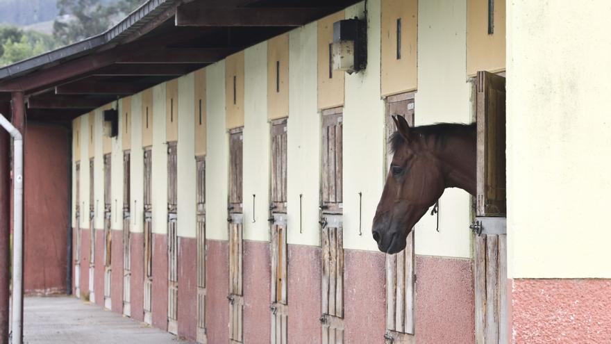 El mundo del caballo celebra que el Ayuntamiento quiera reabrir El Asturcón