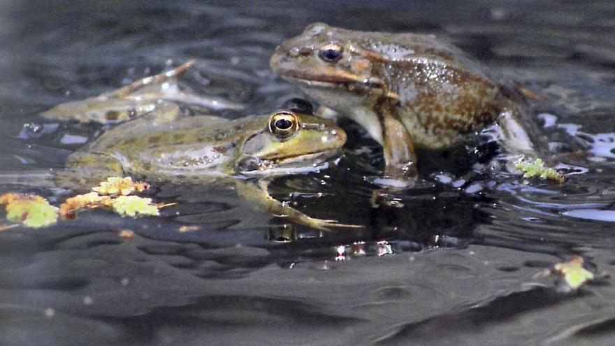 Las prácticas agrícolas amenazan con extinguir los anfibios en Alzira