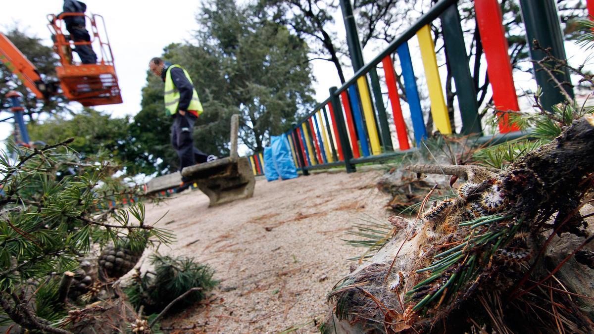 Operarios durante las tareas de limpieza de la procesionaria que anida en los pinos del parque de O Castro.