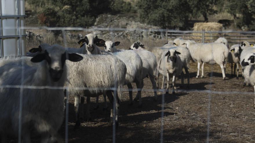"""UPA advierte  del golpe a la ganadería en Zamora por la """"desorbitada"""" subida del pienso"""