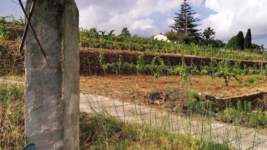 Jesús Pobre, la oportunidad del vino natural