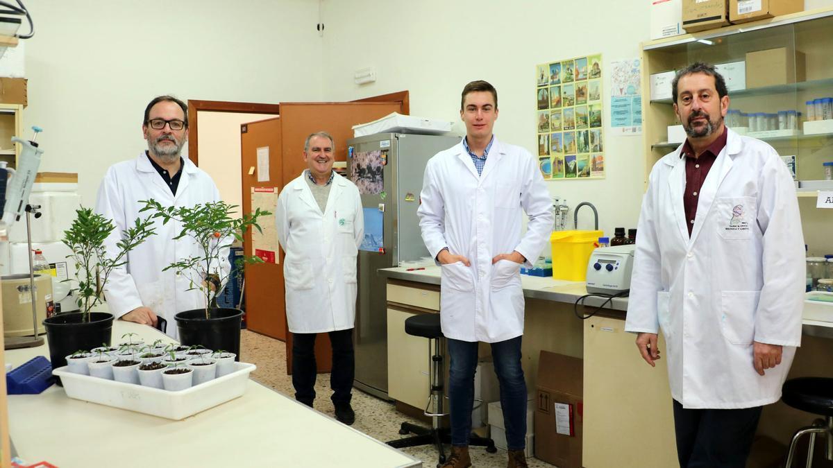 Equipo encargado del estudio sobre injertos de tomate.