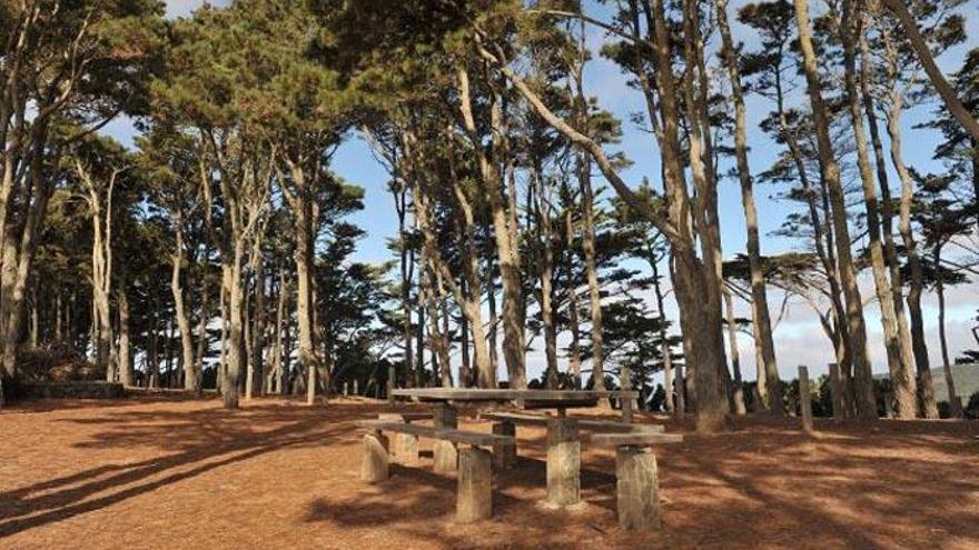 Erradican especies vegetales invasoras en el parque de Mesa Mota